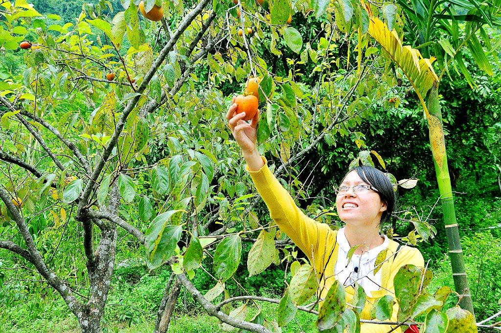 Mượt vườn Thung Nham