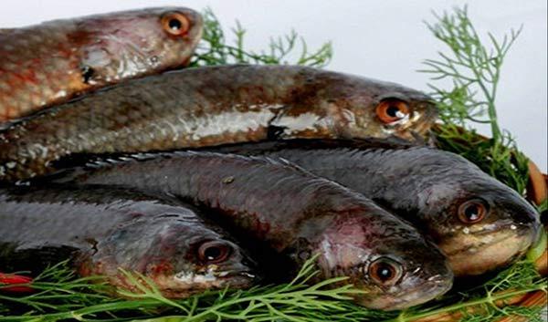 Cá rô Tổng Trường