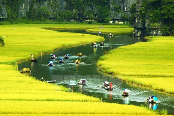 Tam Cốc mùa vàng cảnh sắc thật ấm áp lòng người