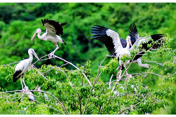 Các loài chim ríu rít đậu trên cành cây kiếm mồi
